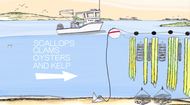 The Seas Will Save Us: How an Army of Ocean Farmers are Starting an Economic Revolution