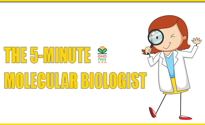 THE 5-MINUTE MOLECULAR BIOLOGIST – THE GENETICS OF GMOS