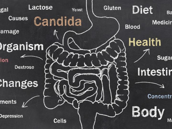 The Candida Crisis