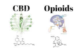 CBD Hemp Extract Can Reduce Opioid Use!